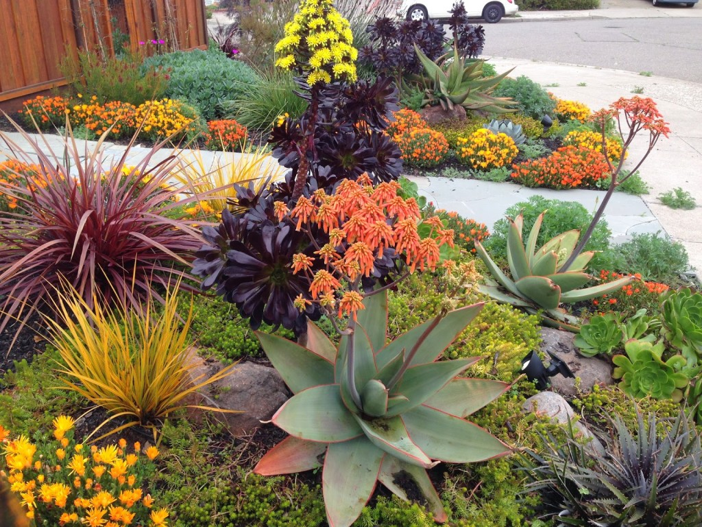 Drought tolerant landscapes for Landscape plant ideas